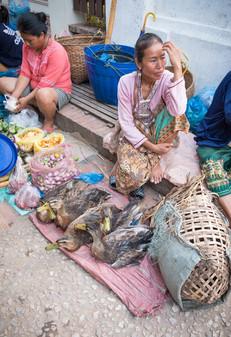Laos #9