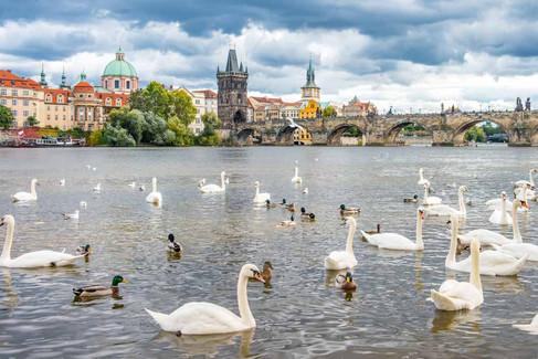 Prague #15