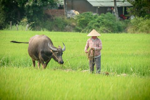 Vietnam #24