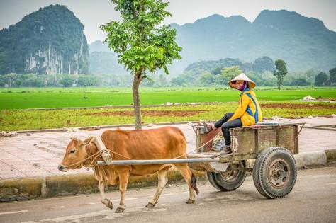 Vietnam #42