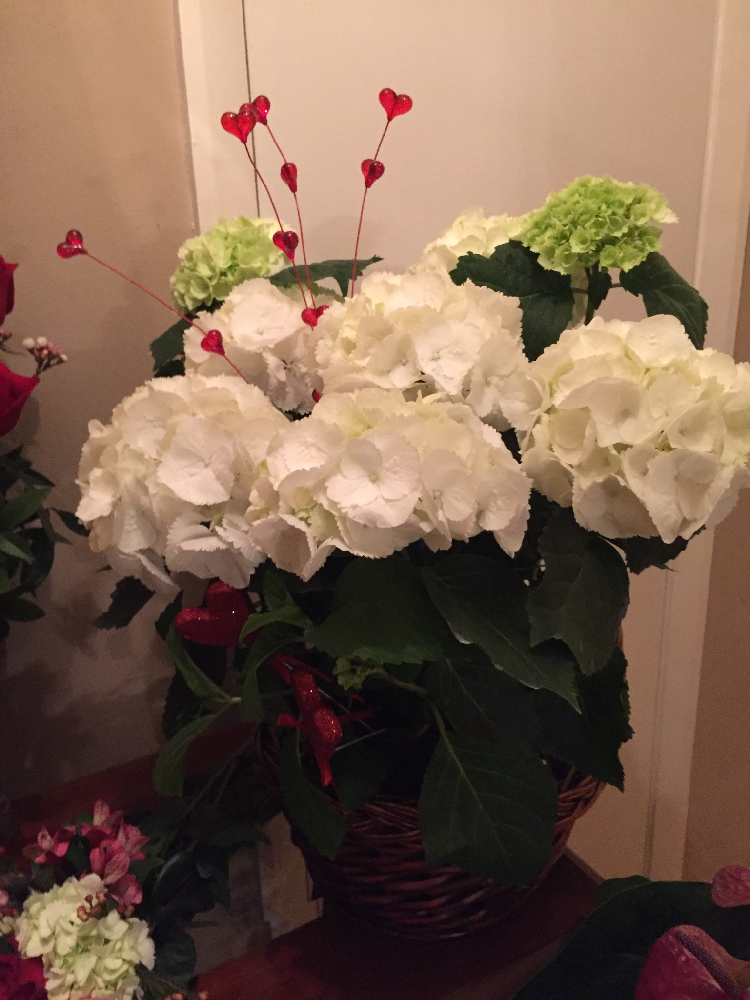 Hydrangea Plant $35 and up