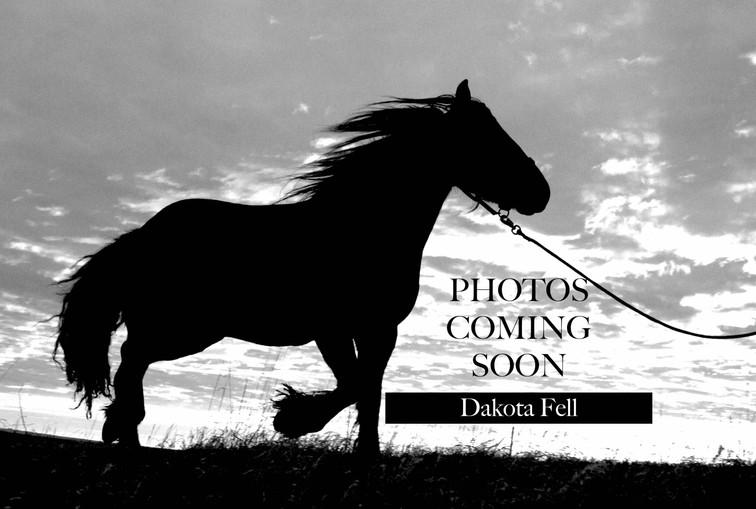 Photos Coming Soon Dakota Fell.jpg