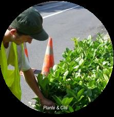 Projet ArbuoGeco: une large contribution des Arbusticulteurs