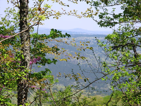 cover Overlook on Cliffy Hollow.JPG