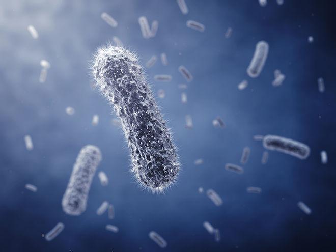 Kodėl bakterijos gali išbūti gyvos tūkstančius metų?