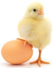 Višta ar kiaušinis