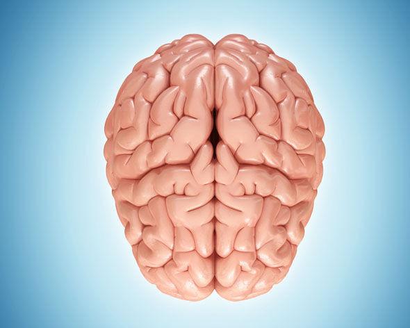 Mokyti turime abi smegenų dalis