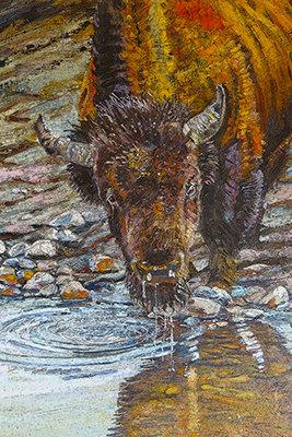 Clark's Fork Buffalo
