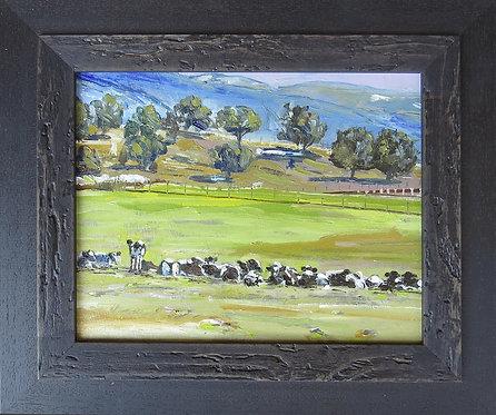 Heber Dairy Herd 8x10