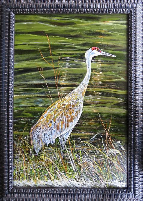 Sandhill Crane 24x36