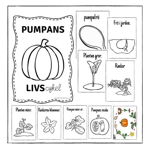 Pumpans livscykel färglägg