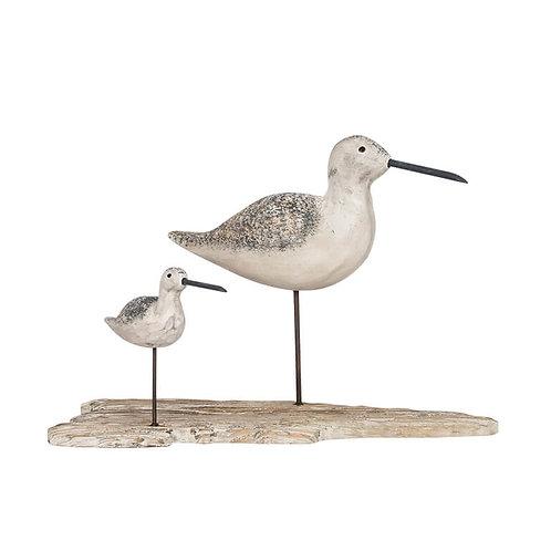 Sea Birds on Driftwood
