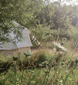 wild meadow glamping