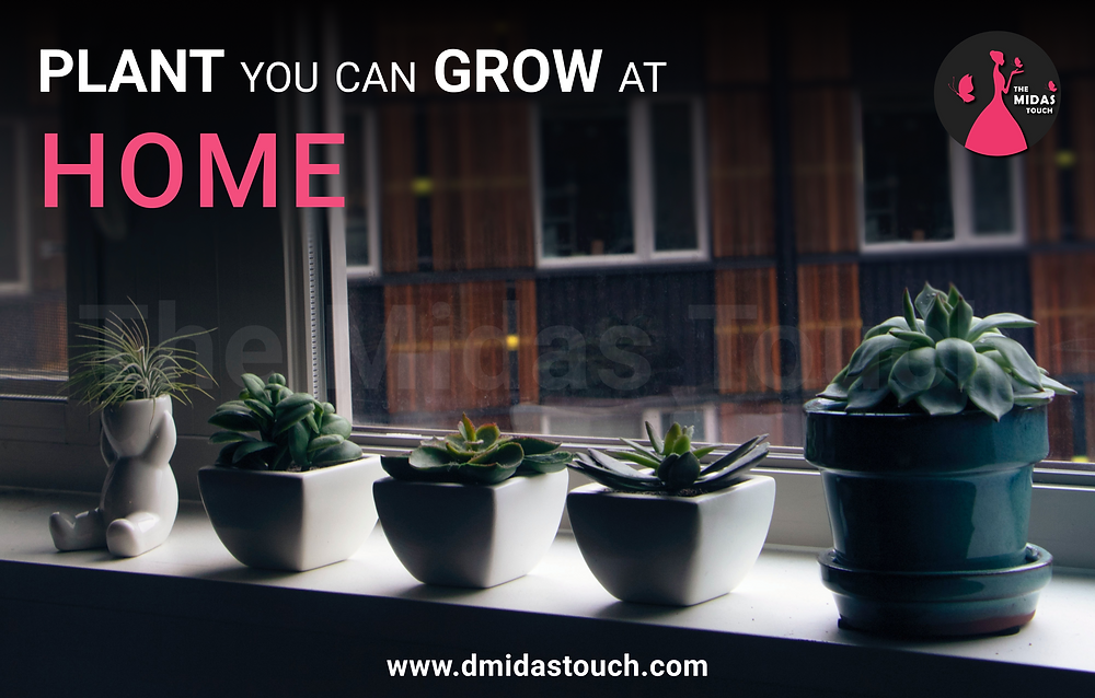 Plant that you can grow at home - D Midas Touch - Life Style  Blog
