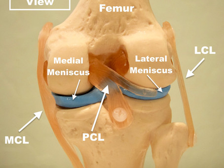 Surgical Removal of a Meniscal Tear (Video)