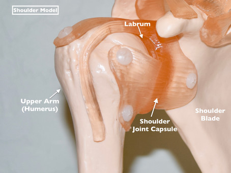 Injury Analysis of a Torn Labrum (Shoulder)
