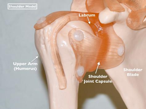 Injury Analysis of a Torn Labrum (Shoulder)