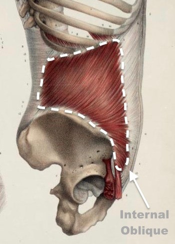 Internal Oblique Muscle - The Injury Source