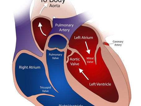 Hypertrophic Cardiomyopathy in an Athlete