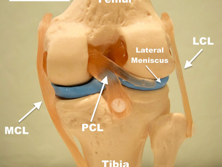 The PCL Injury (Posterior Cruciate Ligament)