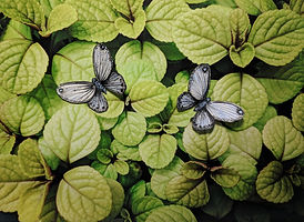 Digital photograph of leaves with collage paper butterflies