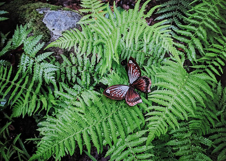 Digital image of ferns with a single paper butterfly