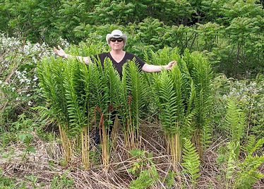Artist standing in larger ferns at the edge were a field turns to woods