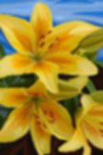 Лилии | Василий Сидорин | VASILY SIDORIN | картина маслом | sidorin.info | Artmagic