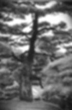 Scan ES2-640.jpg