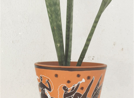 PLANTS AND POTS