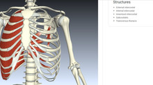 Top 21 Free Musculoskeletal Anatomy Resources