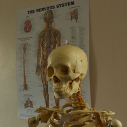 Health in Motion Physiotherapy Sheffield, Advice and Injury Management