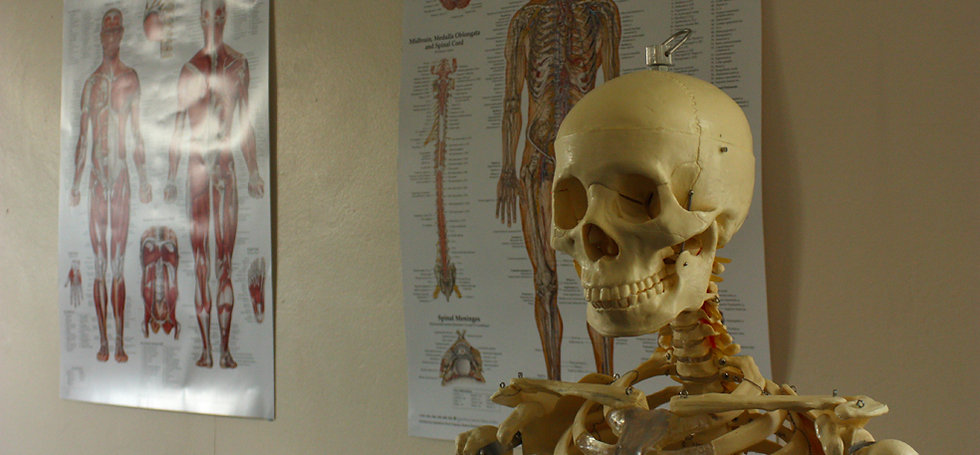 Health in Motion Physiotherapy Sheffield Advice and Injury Management skeleton and nervous system