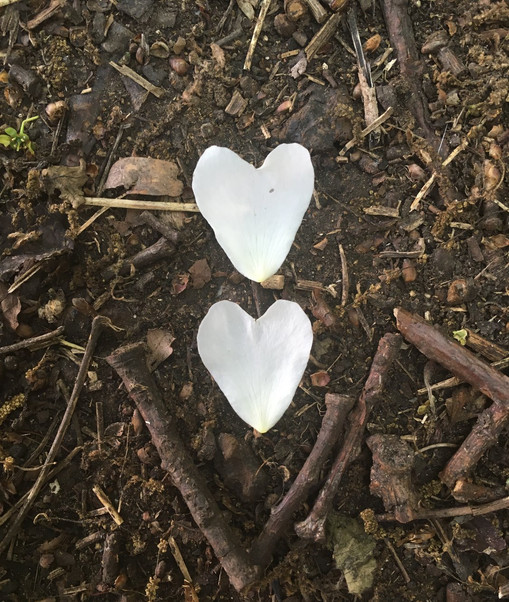 Nature's love hearts