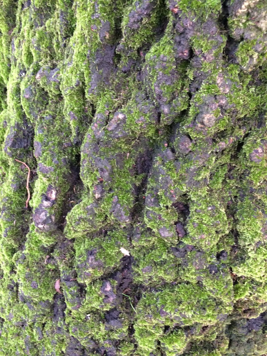 Mossy bark_edited