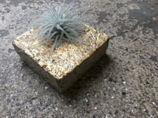 Gold airplant holder