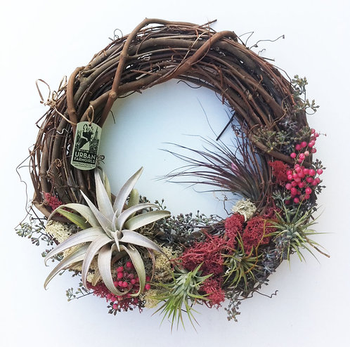 "12"" Kate Wreath (Airplants)"