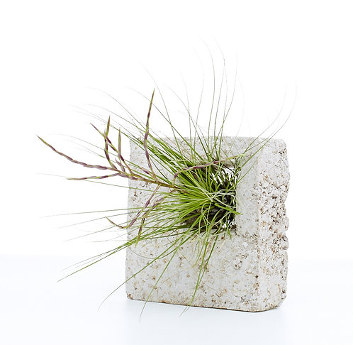Square Airplant Sconce (comes with 1 airplant)