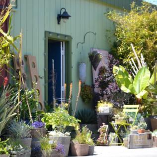 Display garden at the studio