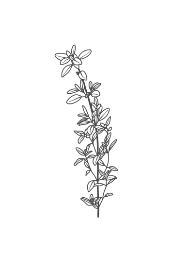 culinary-herbs-black-02.png