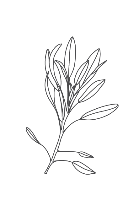 culinary-herbs-black-03.png
