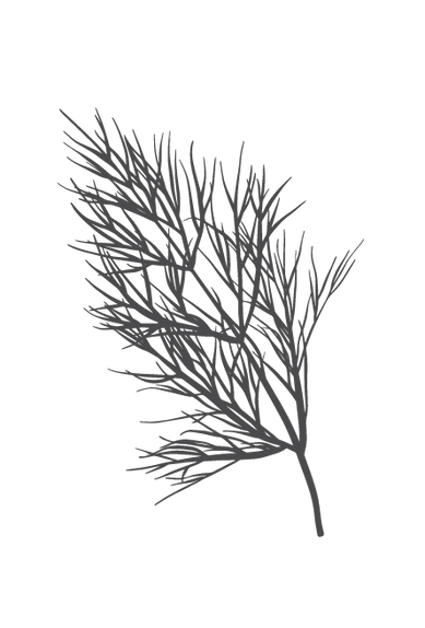 culinary-herbs-black-04.png