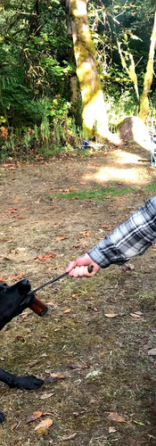 Man in wheelchair smiling while playing tug of war with black lab outside during a camping trip.