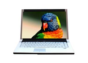 Parrot on Laptop Screen