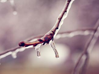 Winter storm Octavia!
