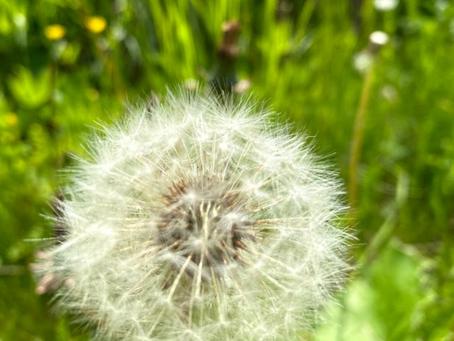 Seeds & dreams