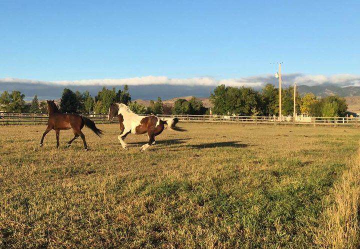 The boys horsin' around