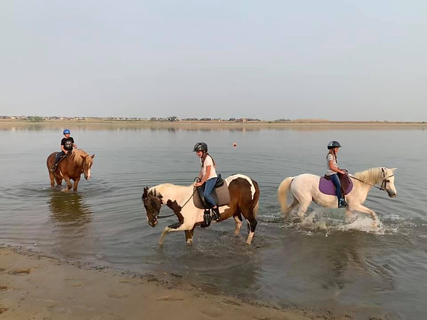 horses in the lake.jpg
