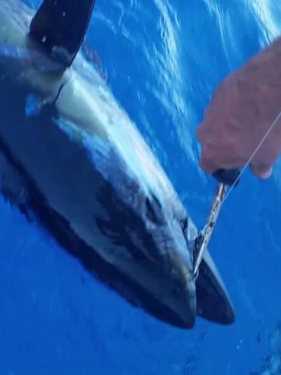 Isula Fishing No Kill