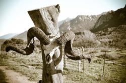 Fior di Lezza à cheval en Corse